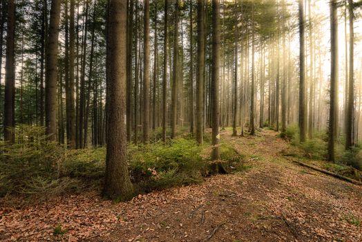 Фото бесплатно солнечные лучи, деревья, пейзаж