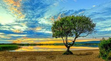 Фото бесплатно озеро, дерево, небо, берег, пейзаж