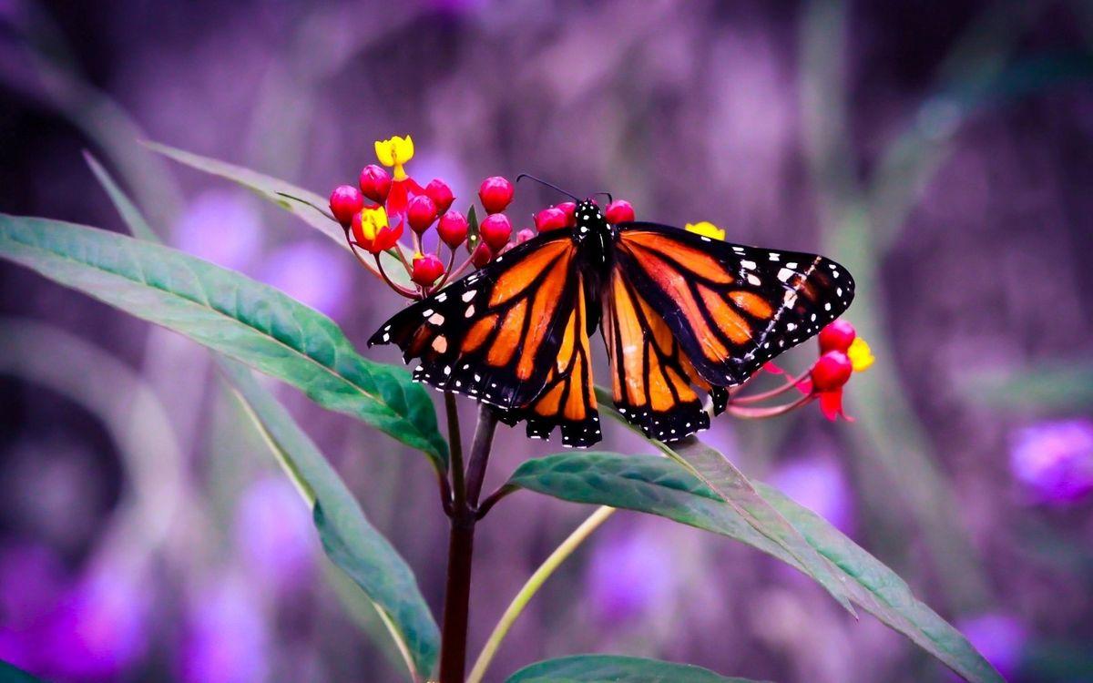 Free photo butterfly, wings, pattern - to desktop