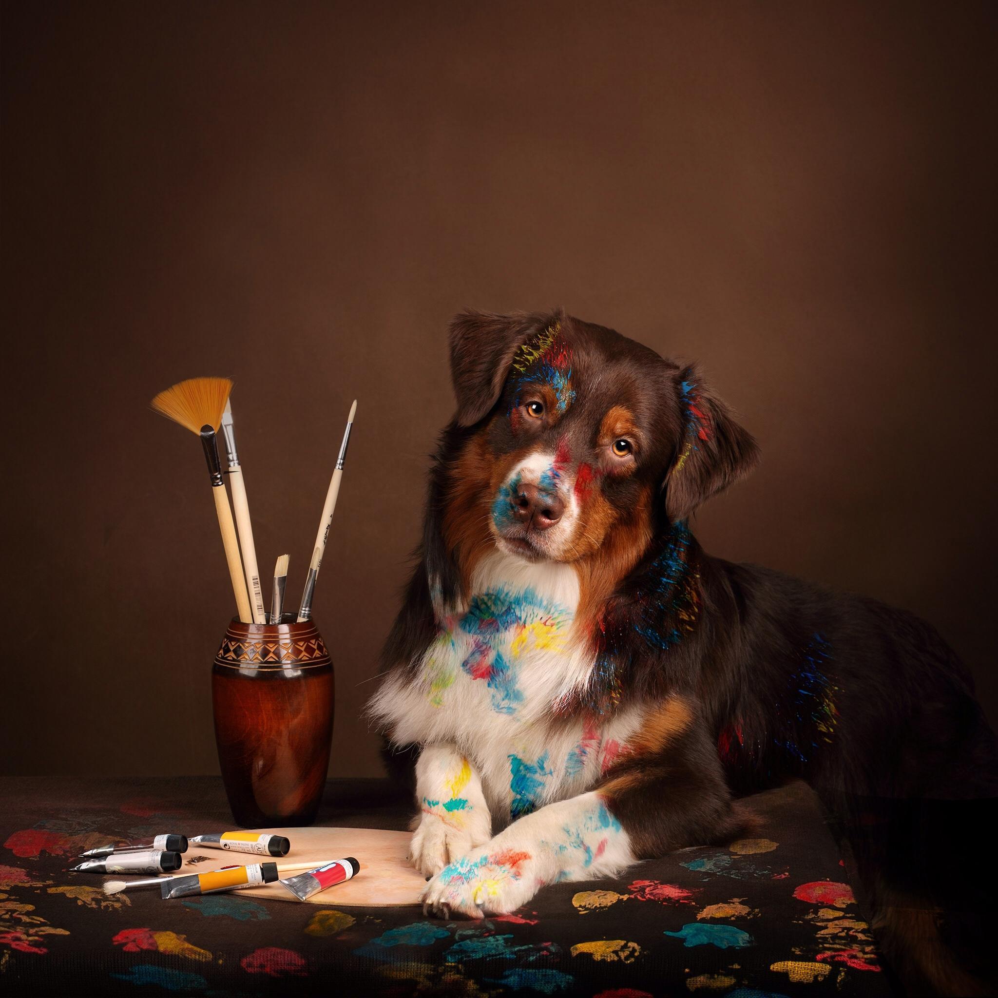 кисти, краски, собака