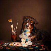 Фото бесплатно кисти, краски, собака