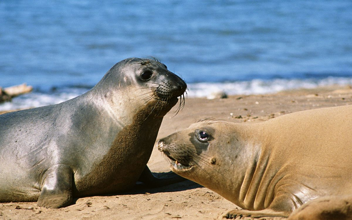 Фото бесплатно морские котики, морды, усы, ласты, шкура, берег, море, животные