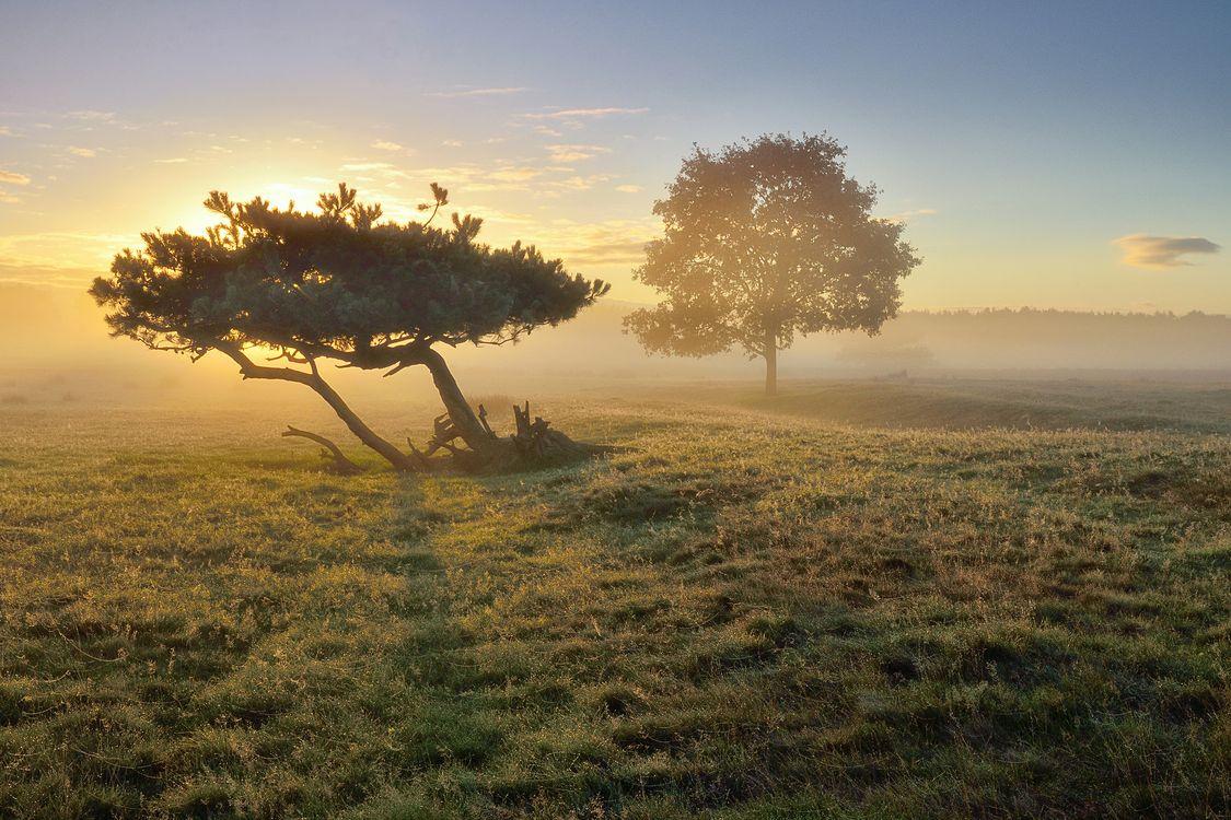 Фото бесплатно закат, деревья, туман - на рабочий стол