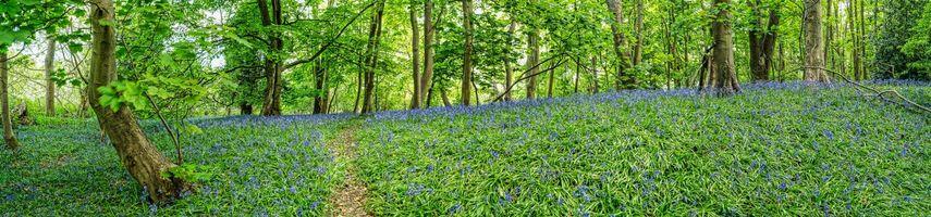 Фото бесплатно панорама, цветы, лес