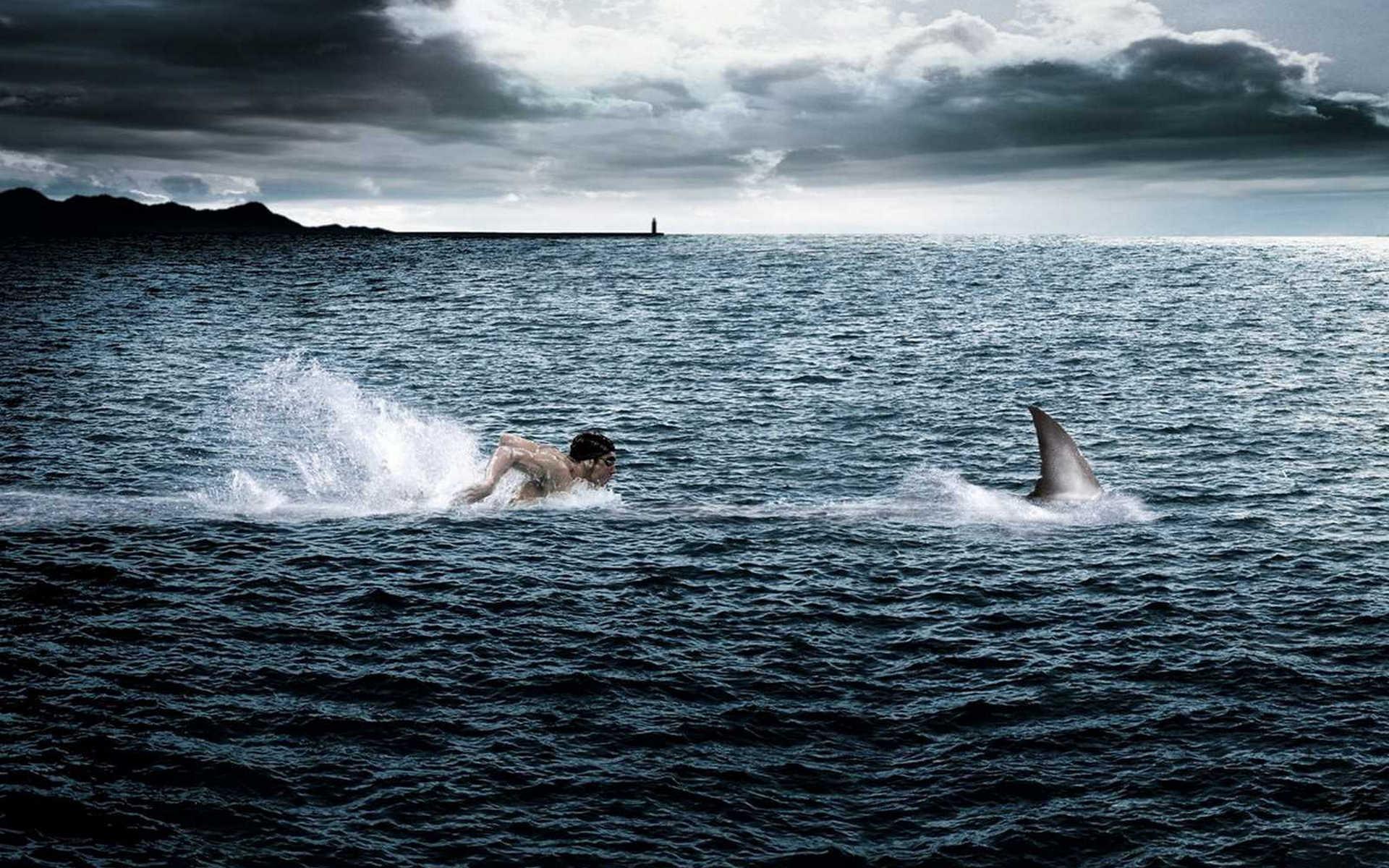 обои море, акула, плавник, пловец картинки фото