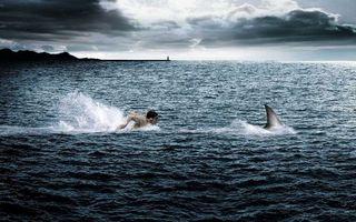 Фото бесплатно море, акула, плавник