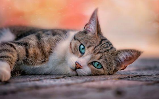 Бесплатные фото кот,зеленые глаза,отдых