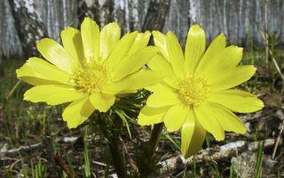 Бесплатные фото лепестки,желтые,трава,зеленая,коряги,ветки,лес