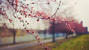Бесплатные фото дерево,листья,ветки,цветет,весна