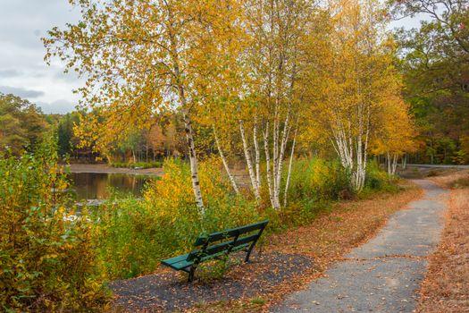 Фото бесплатно Броктон, Плимут, Массачусетс, США, осень, парк, деревья, дорога, лавочка, водоём, пейзаж