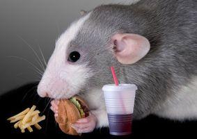 Фото бесплатно крыса, гамбургер, напиток