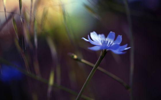 Photo free cornflower, petals, blue