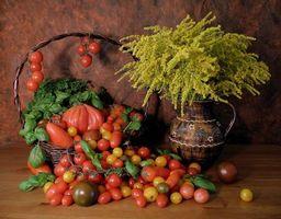 Фото бесплатно цветы, помидоры, натюрморт