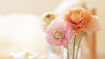 Бесплатные фото ваза,георгины,лепестки,стебли,фон,мутный