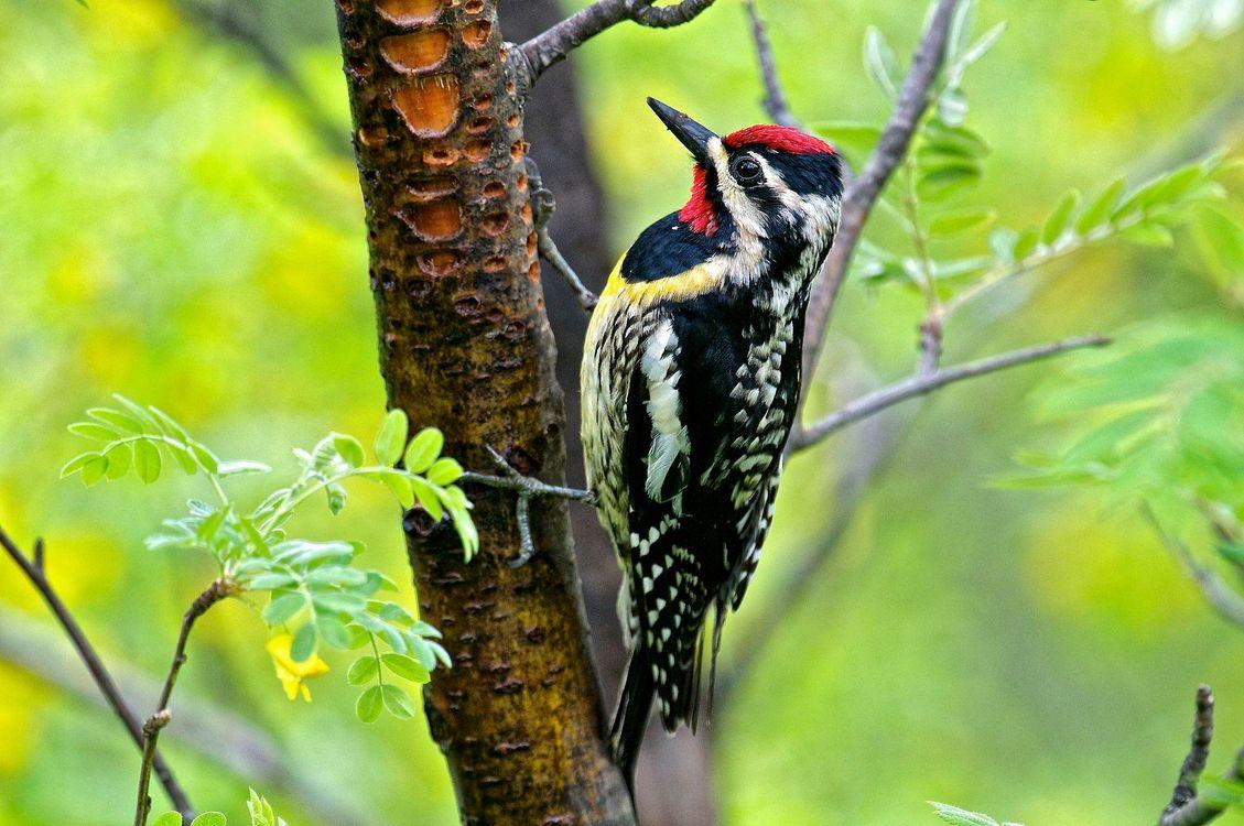 Фото бесплатно дерево, дятел, птица, птицы