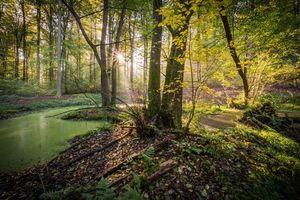 Фото бесплатно лес, вода, деревья, солнце