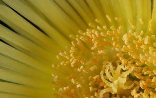 Бесплатные фото цветок,лепестки,желтые,пестики,тычинки,пыльца