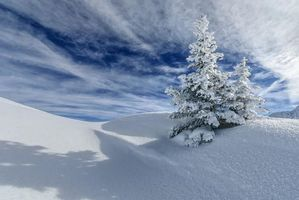 Обои зима, снег, дерево, сугробы, ель, ёлка, пейзаж