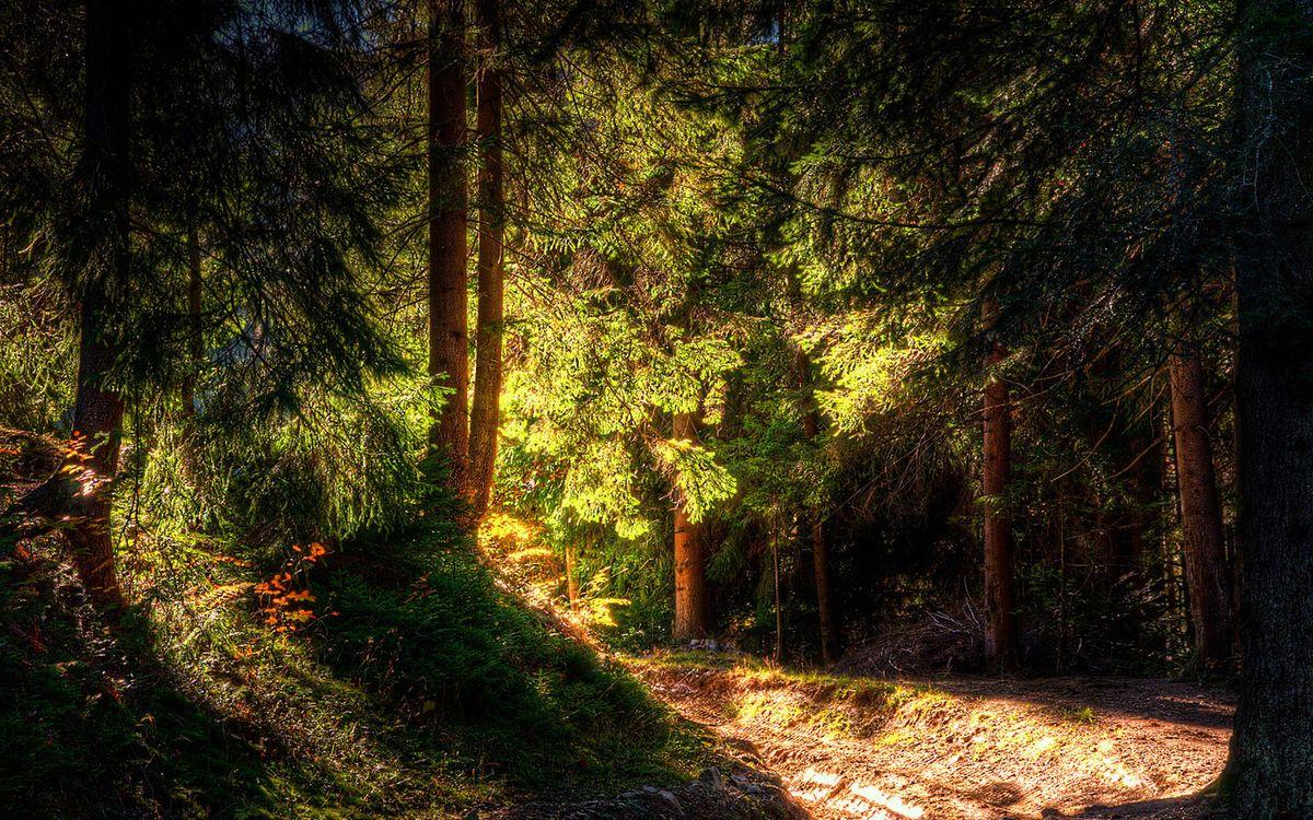 Фото бесплатно лес, стволы, деревья, дорога, свет, солнце, природа