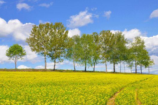 Фото бесплатно пейзажи, желтое поле, пейзаж