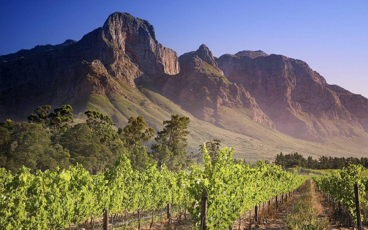 Фото бесплатно виноградник, ряды, деревья, горы, скалы, небо, пейзажи