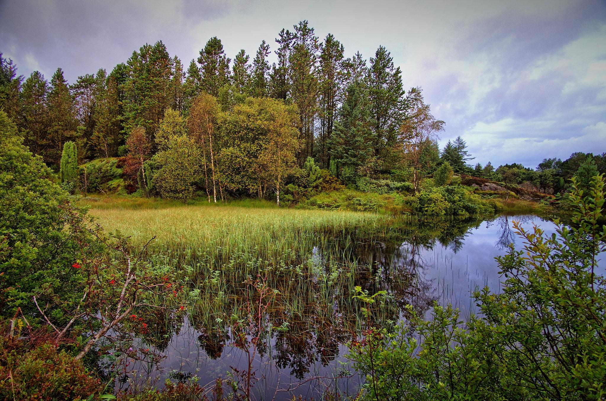 обои лес, водоём, деревья, тучи картинки фото