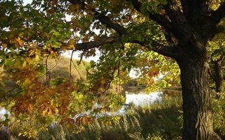 Заставки река,берег,трава,деревья,ветви,листва