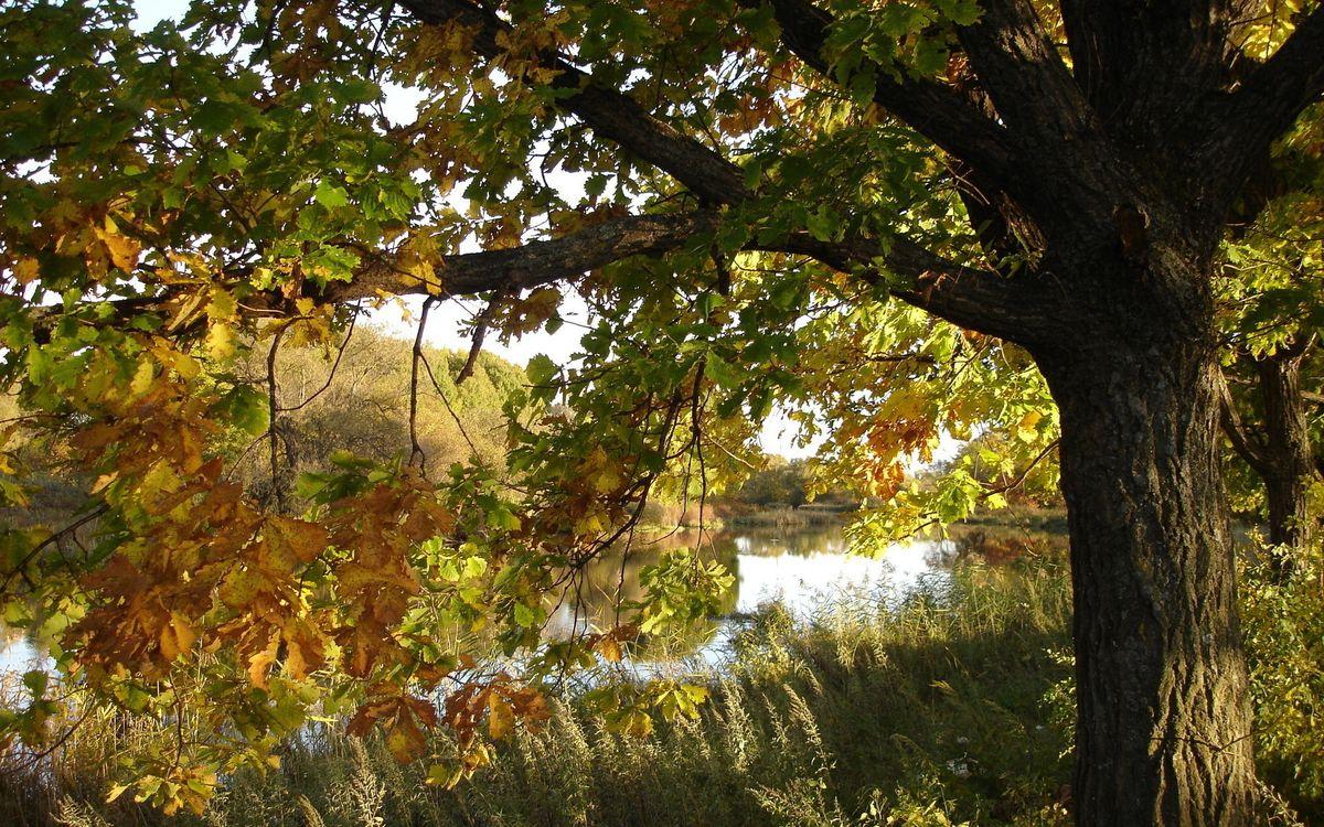 Фото бесплатно река, листва, берег - на рабочий стол