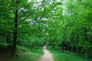 Бесплатные фото Urkiola Natural Park,Basque Country,Spain,лес,парк,дорога,деревья