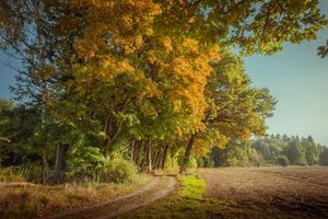 Фото бесплатно осень, пейзаж, пашня