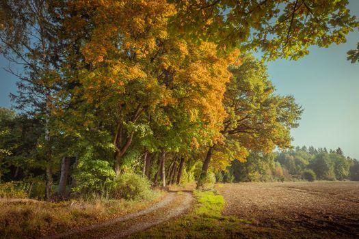 Photo free autumn, landscape, arable land