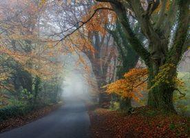 Заставки осень, дорога, лес, деревья, пейзаж