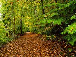 Заставки осень,лес,деревья,дорога,природа