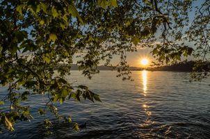 Фото бесплатно Озеро Цюрих, закат, ветки деревьев, солнце, пейзаж