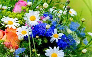 Фото бесплатно букет, композиция, розы