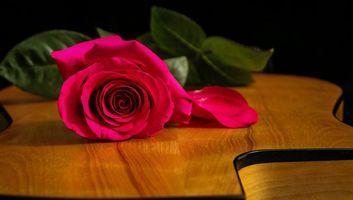 Бесплатные фото роза, цветок, флора, гитара