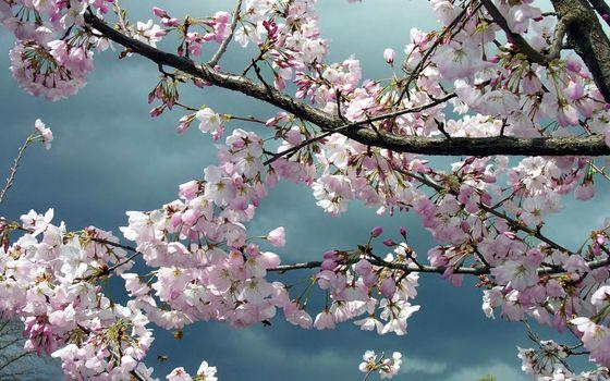 Фото весна, яблоня больших размеров