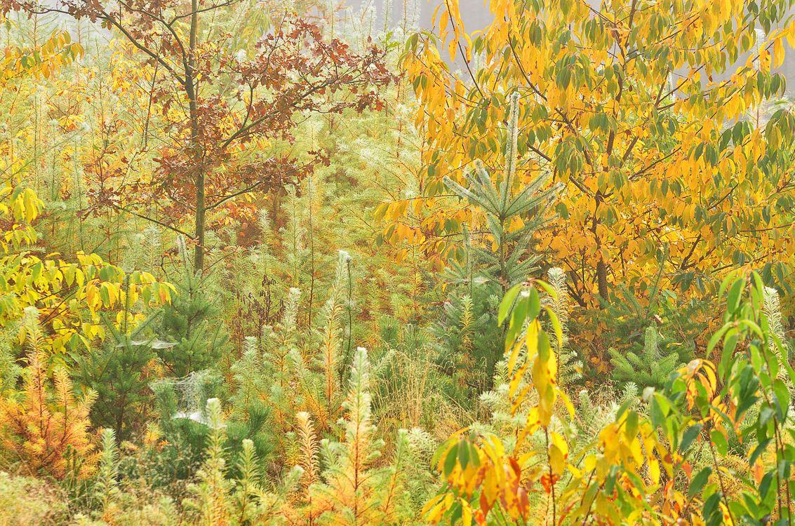 Фото бесплатно осень, лес, деревья, пейзаж, природа, природа