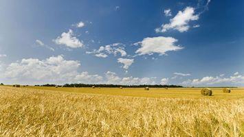 Бесплатные фото поле,колосья,тюки,салома,деревья,небо,облака