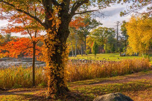 Фото бесплатно Броктон, Плимут, Массачусетс, США, осень, парк, деревья, водоём, пейзаж