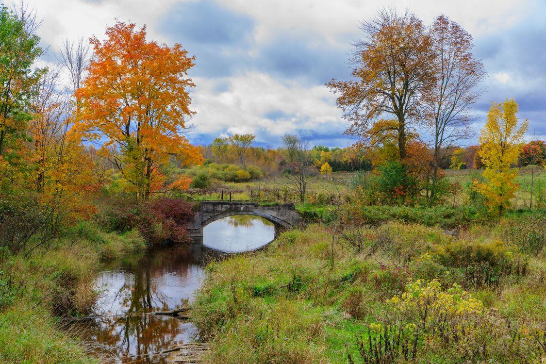 Фото бесплатно осень, поле, речка, мост, деревья, пейзаж, пейзажи