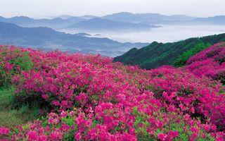 Фото бесплатно горы, трава, цветы, розовые, долина, туман