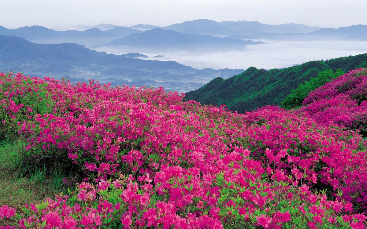 Фото бесплатно горы, трава, цветы, розовые, долина, туман, природа