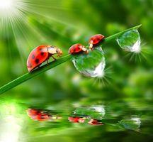 Фото бесплатно зелень, роса, капли