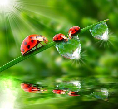 Photo free greens, dew, drops