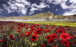 Бесплатные фото поле,маки,лепестки,коробочки,трава,горы,небо