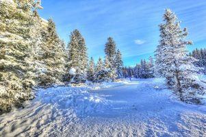 Бесплатные фото зима,деревья,дорога,снег,пейзаж,Альберта,Канада
