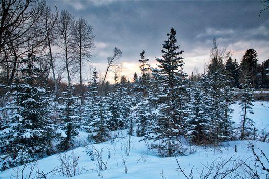 Фото бесплатно зима, закат, деревья