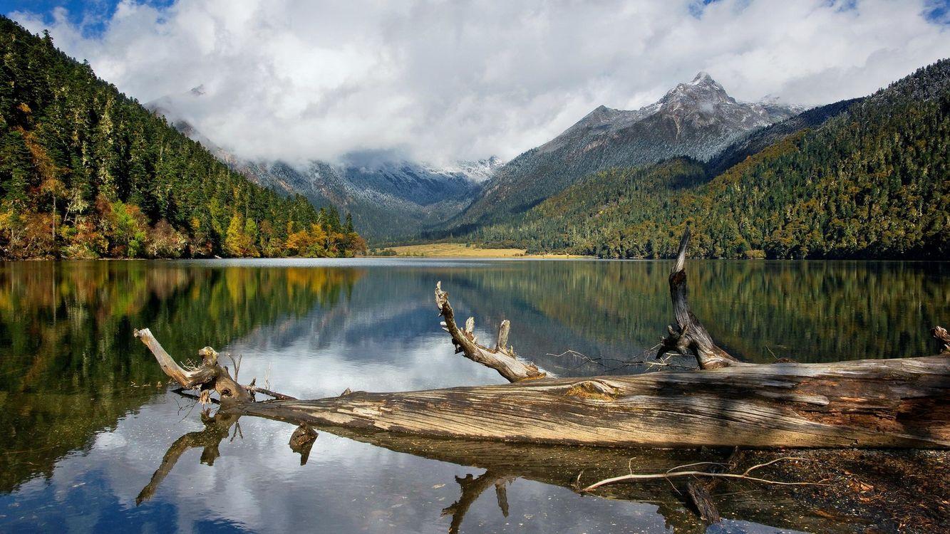 Фото бесплатно озеро, коряга, горы, деревья, небо, облака, природа