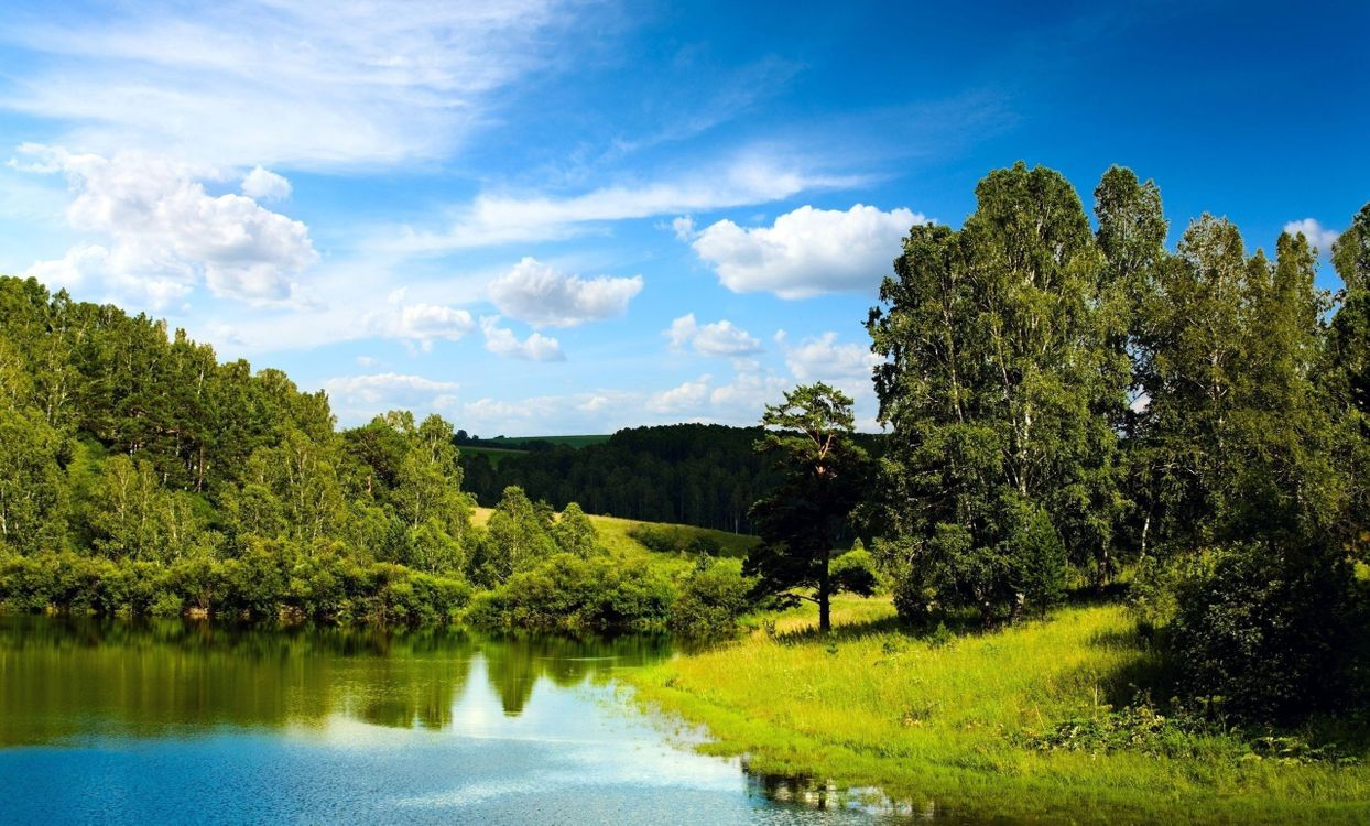 Фото бесплатно трава, берег, лес - на рабочий стол